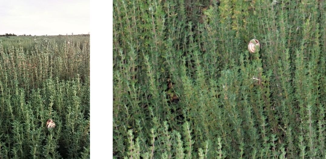 erbe-aromatiche-fauna
