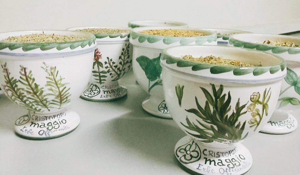 erbe-aromatiche-vasi